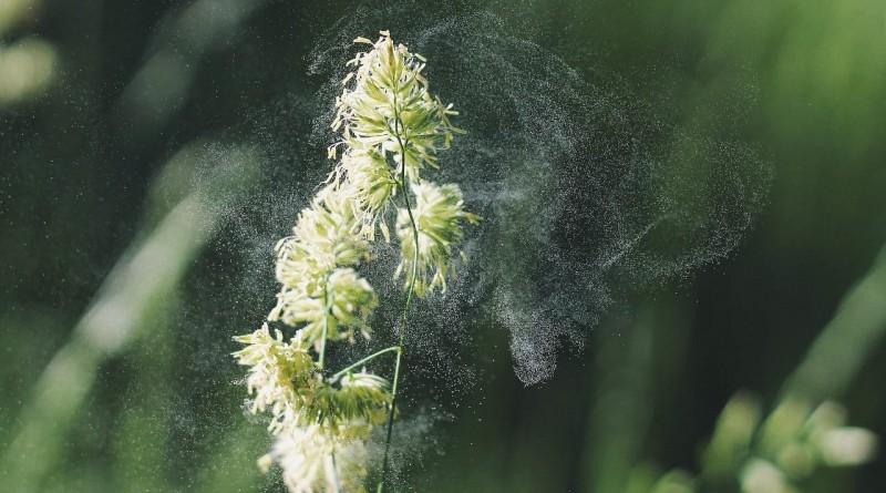 Ratgeber für Allergiker – Was hilft gegen Allergien?